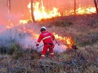 Dichiarazione dello stato di grave pericolosità per incendi boschivi
